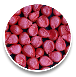 CornPolymer
